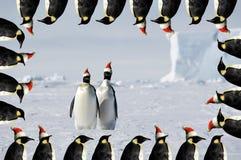 Scheda di natale delle coppie del pinguino Immagini Stock Libere da Diritti