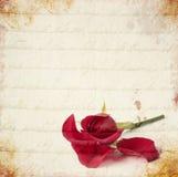 Scheda di rosa dell'annata di colore rosso Immagine Stock Libera da Diritti
