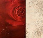 Scheda di rosa di colore rosso Fotografia Stock