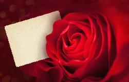 Scheda di rosa di colore rosso Immagini Stock