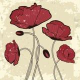 Scheda di vecchio stile con i fiori del papavero Fotografia Stock Libera da Diritti