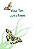 Scheda di vettore con le farfalle e l'erba Immagini Stock