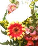 Scheda e fiori Fotografia Stock Libera da Diritti