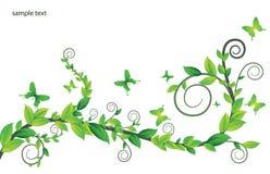 Scheda floreale con le farfalle illustrazione di stock