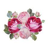 Scheda floreale Mazzo delle rose dell'acquerello Illustrazione Fotografia Stock