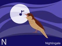 Scheda istantanea di alfabeto animale, N per il nightingale Fotografia Stock Libera da Diritti