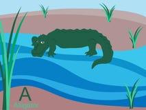 Scheda istantanea di alfabeto animale, A per il coccodrillo Immagini Stock Libere da Diritti