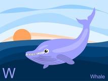 Scheda istantanea di alfabeto animale, W per la balena Immagine Stock