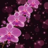 Scheda luminosa dell'invito o di saluto con l'orchidea Fotografia Stock