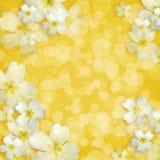 Scheda per l'invito o la congratulazione Fotografie Stock