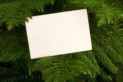 Scheda sempreverde ed in bianco Fotografie Stock
