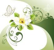 Scheda verde con il fiore e la farfalla Fotografia Stock Libera da Diritti