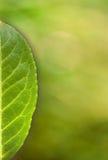 Scheda verde del foglio con spazio Fotografia Stock