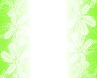 Scheda verde di Florals. Fotografia Stock Libera da Diritti