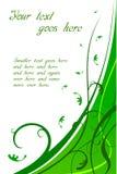 Scheda verde floreale Fotografia Stock