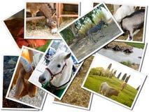 Schede della foto degli animali Fotografia Stock