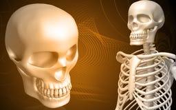 Schedel en skelet royalty-vrije illustratie