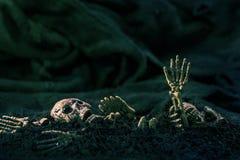 Schedel en skelet op donkere achtergrond van de grond de droge grond, concept Ha Stock Fotografie