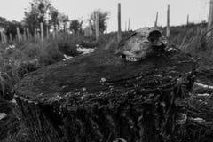 Schedel op een boomboomstam Royalty-vrije Stock Foto's