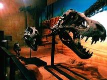 Schedel t -t-rex Royalty-vrije Stock Fotografie