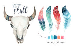 Schedel van de waterverf de Boheemse koe Westelijke zoogdieren Watercolourheup stock illustratie