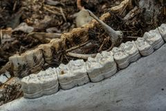Schedel van het dier bij het verlaten oude veelandbouwbedrijf in het verloren dorp royalty-vrije stock foto