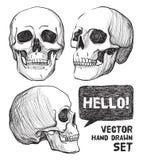 schedels Uitstekende vectorillustratie Royalty-vrije Stock Foto's