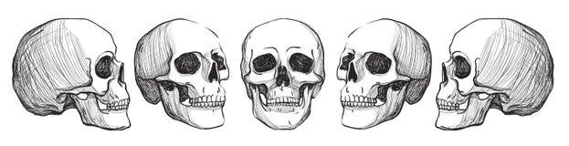schedels Uitstekende vectorillustratie Stock Fotografie