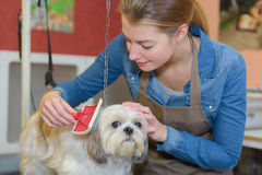 Schedule to pet salon Royalty Free Stock Photos