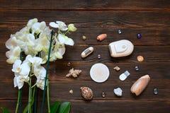 Scheerapparaatdepilator met orchideeën en shells op donkere houten Royalty-vrije Stock Fotografie