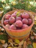 Scheffel-Korb voll von roten Äpfeln lizenzfreies stockbild