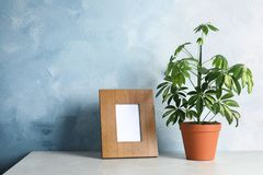 Schefflera plant and photo frame on table near color wall, space for design. Home decor stock photo