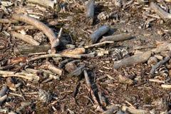 scheggia il legno Immagine Stock Libera da Diritti
