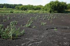 scheiße Trocknende Rückstände in Düngemittel See für trocknendes Abwasser Lassen Sie Exkremente ab Lizenzfreies Stockfoto