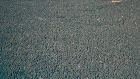 scheiße Trocknende Rückstände in Düngemittel See für trocknendes Abwasser Lassen Sie faecesn ab stock footage