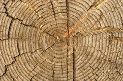 Scheibe der alten Logs Stockfotografie
