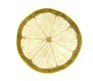 Scheibe der Zitrone Lizenzfreie Stockfotos