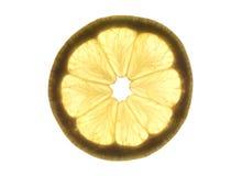 Scheibe der Zitrone Lizenzfreies Stockbild