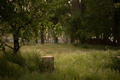 Scheibe des Baums auf dem Boden nahe Moosstumpf mit freiem Raum für Ihr Einzelteil lizenzfreies stockfoto