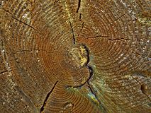 Scheibe des Holzes Stockfotos