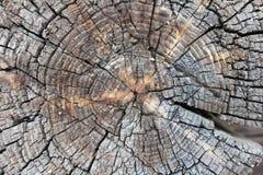 Scheibe des Holzes schwer beunruhigt stockbild