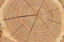 Scheibe des natürlichen Hintergrundes des hölzernen Bauholzes Lizenzfreies Stockbild