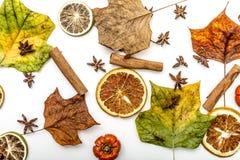 Scheiben von getrockneten Orangen, Zimt, Anisblume, Kürbise und trocknen Blätter lizenzfreie stockfotografie