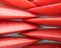 Scheibewassermelone auf Eis Lizenzfreie Stockfotos