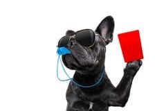 Scheidsrechtershond met fluitje royalty-vrije stock afbeelding