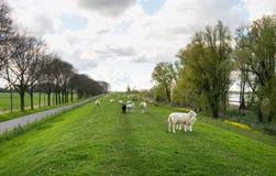 Scheinbar endloser langer Damm im Frühjahr Stockbild