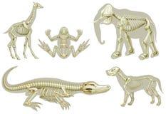 Scheletri degli animali illustrazione vettoriale