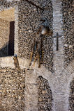 Scheletri umani nella cappella delle ossa sulla chiesa dello St Francis, Evora, Portogallo Fotografia Stock