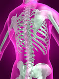scheletro 3d illustrazione vettoriale