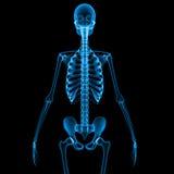 scheletro Immagini Stock Libere da Diritti
